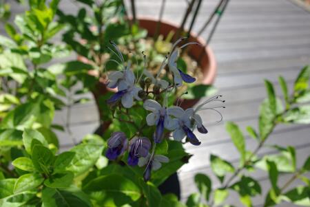花の都公園_ドームの花2