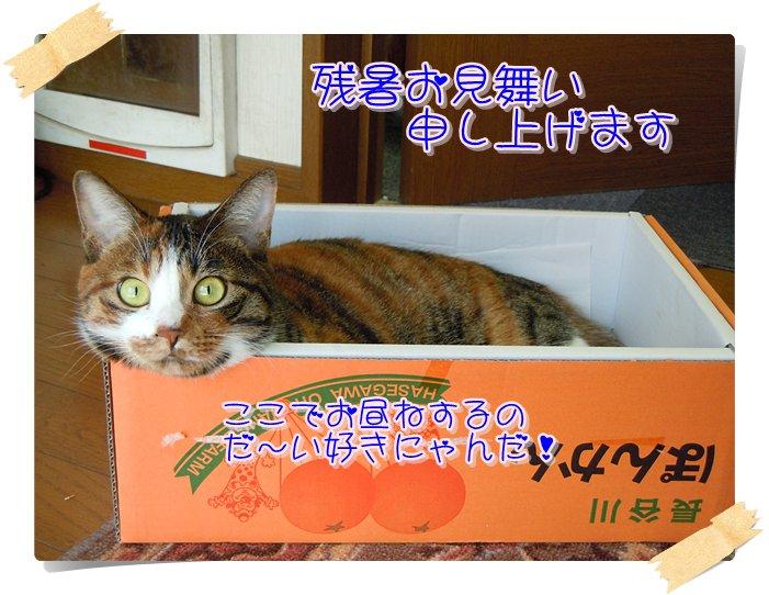 Keikoさん残暑お見舞い