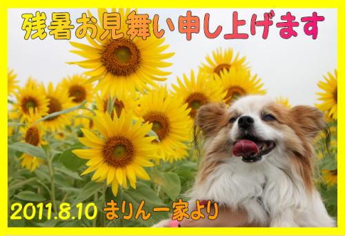 2011残暑お見舞い_まりんママさん