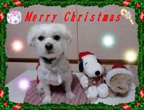 2011クリスマス_ひっきー08さん