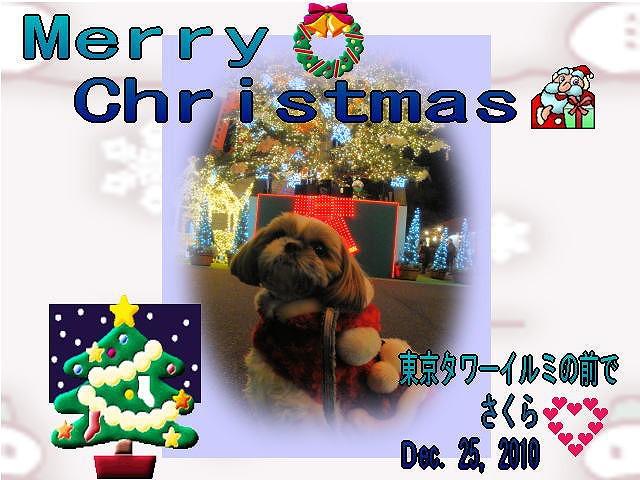 2010クリスマスなな茶丸さん