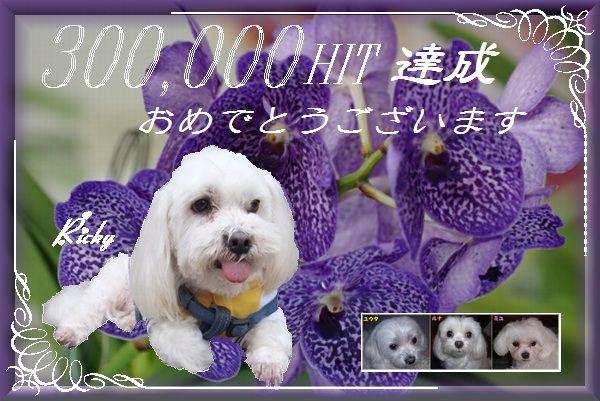 300Khit_ekubo19さん