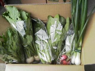 野菜07.05。16