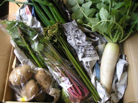 08.05.21野菜セット