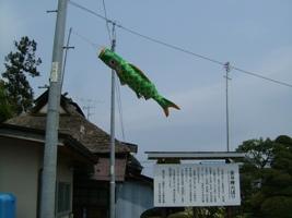 本染め鯉のぼり