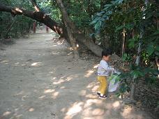 画像 1546木の実拾い.JPG