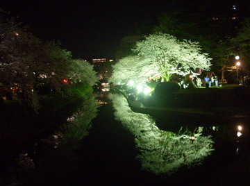 2010 夜桜1.jpg