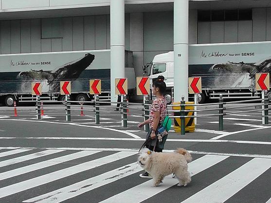2011ミスチル散歩.jpg