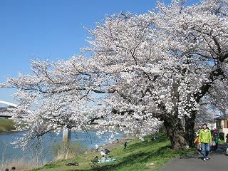 東日本大震災 219.jpg