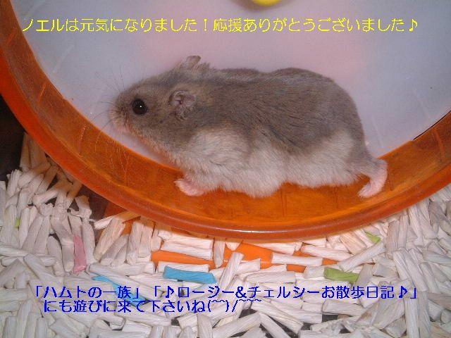 0805ノエル・ホイールc.jpg