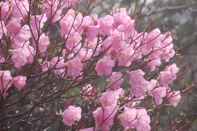 岩黒山20080511