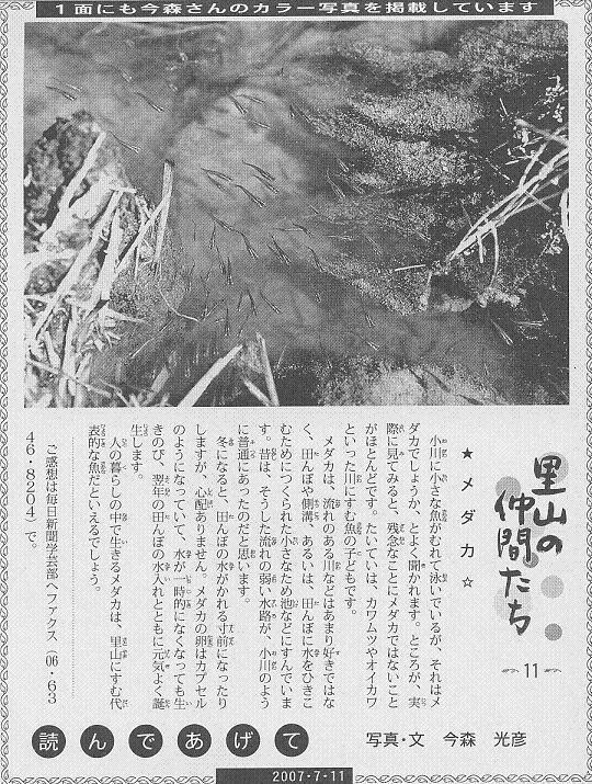 11 メダカ60.JPG