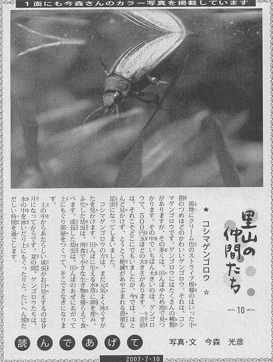 10 コシマゲンゴロウ60.JPG