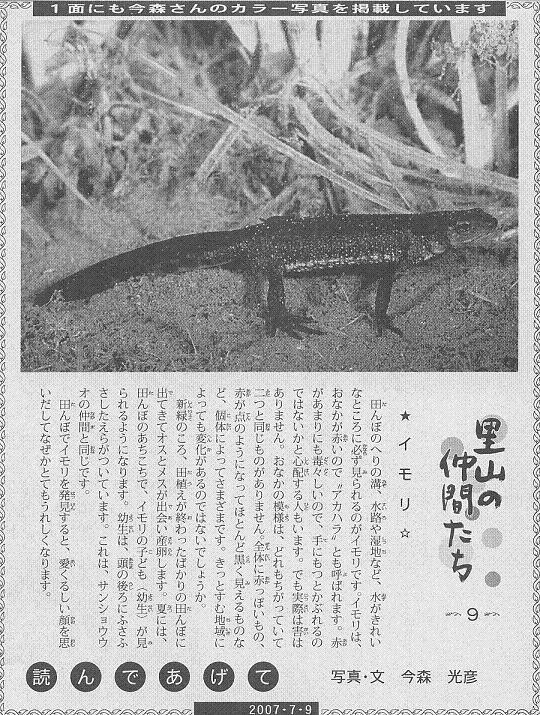 09 イモリ60.JPG
