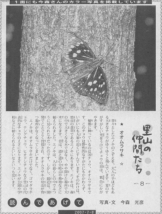 08 オオムラサキ60.JPG