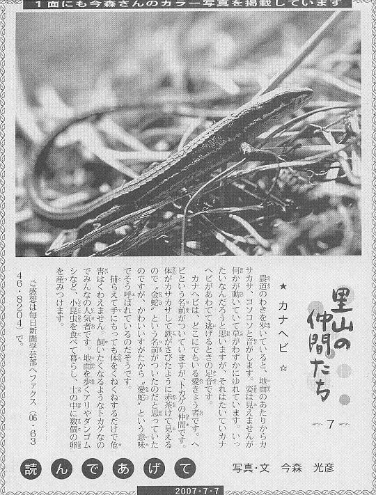 07 カナヘビ60.JPG