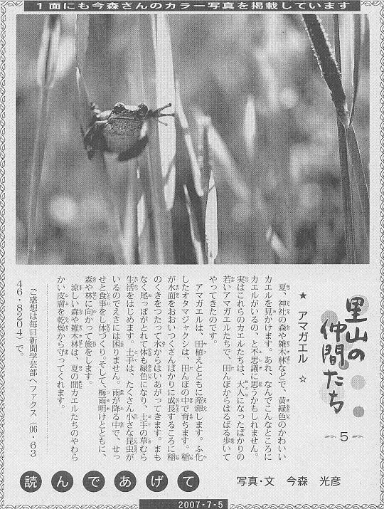 05 アマガエル60.JPG