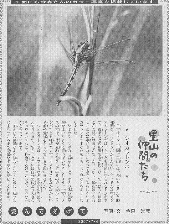 04 シオカラトンボ60.JPG