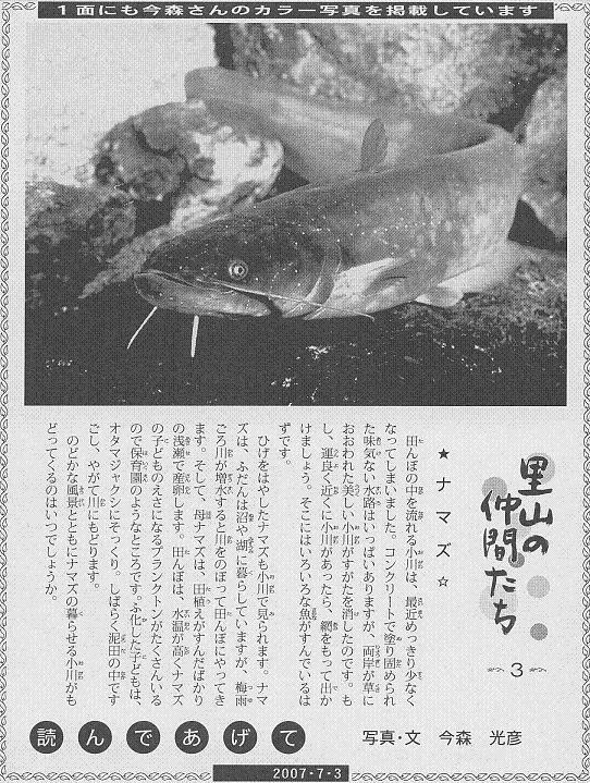03 ナマズ60.JPG