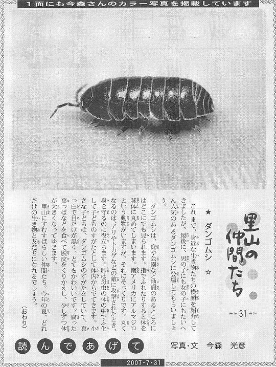 31 ダンゴムシ 白黒 グレイ60.JPG