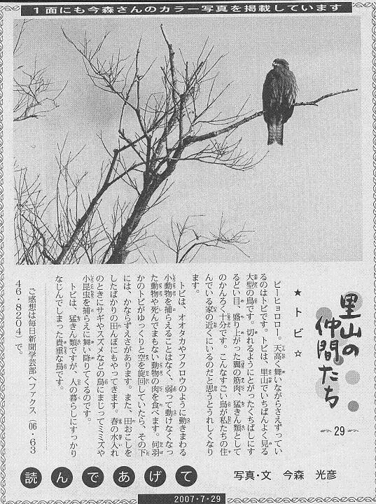 29 トビ60.JPG