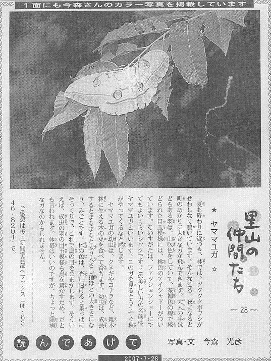 28 ヤママユガ60.JPG
