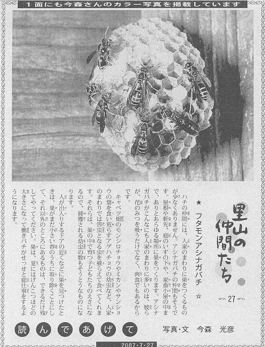 27 フタモンアシナガバチ60.JPG