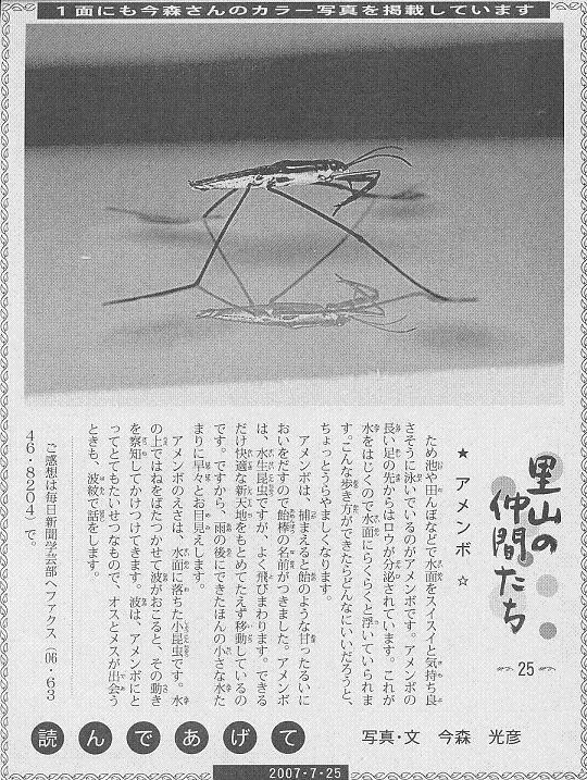 25 アメンボ60.JPG