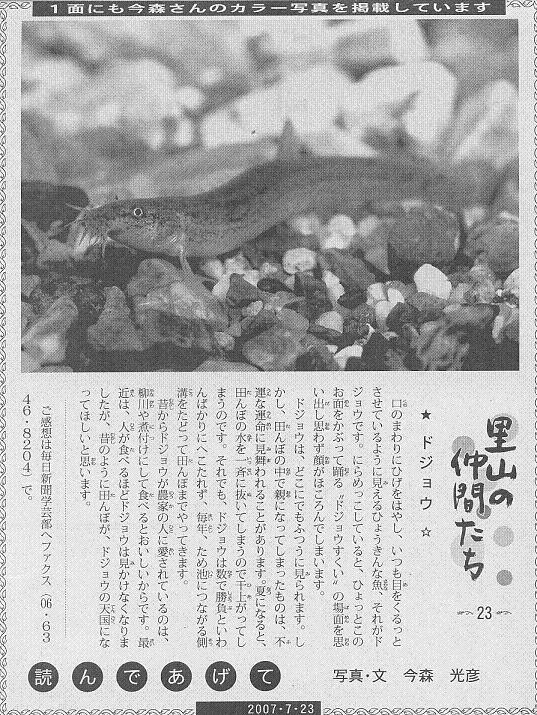 23 ドジョウ60.JPG