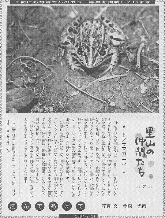 21 トノサマガエル60.JPG