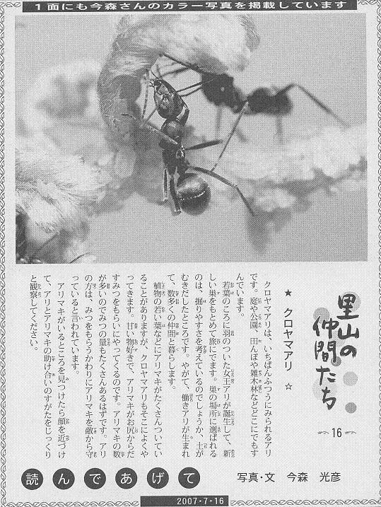 16 クロヤマアリ60.JPG