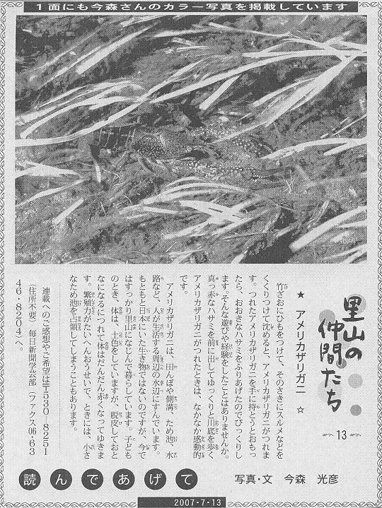 13 アメリカザリガニ60.JPG
