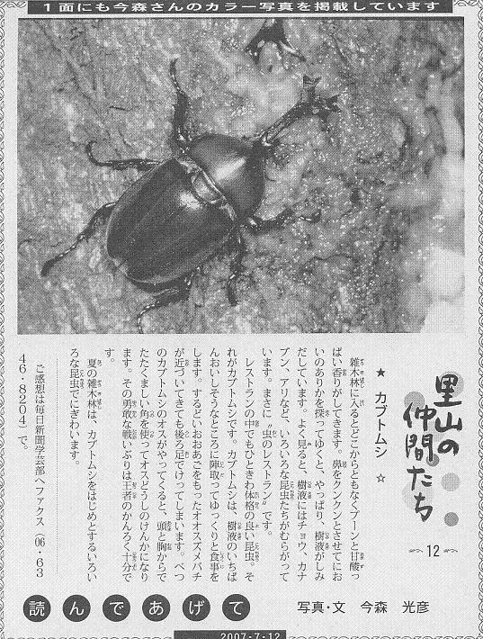 12 カブトムシ60.JPG