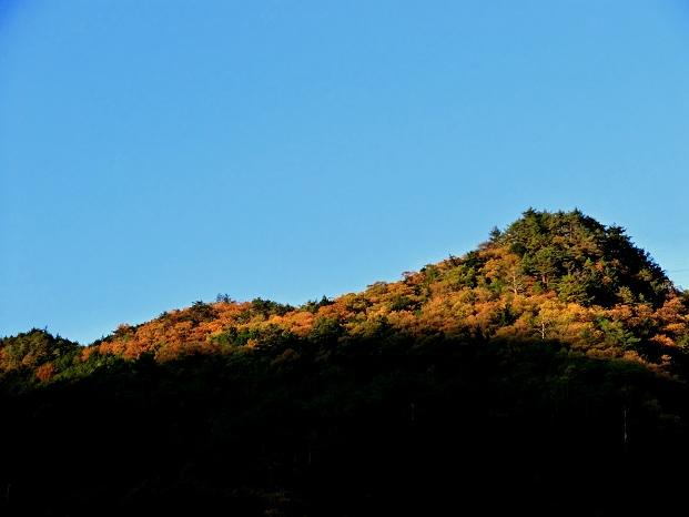 阪本山紅葉