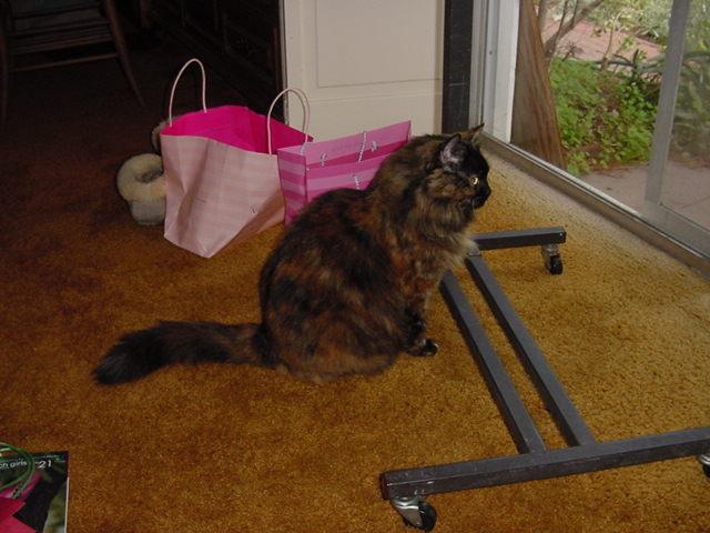 Sara 2006 Jan.jpg
