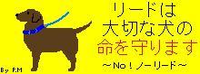 NO!ノーリード