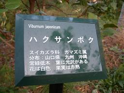 ハクサンボク・花名札.