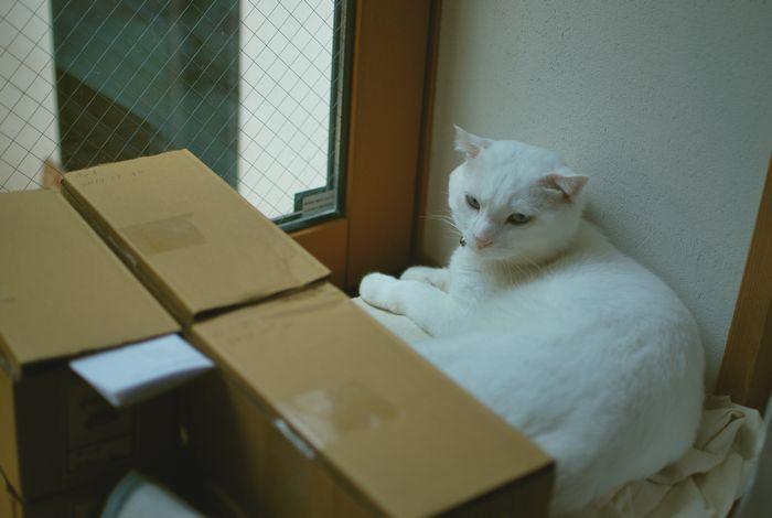 店内猫.jpg