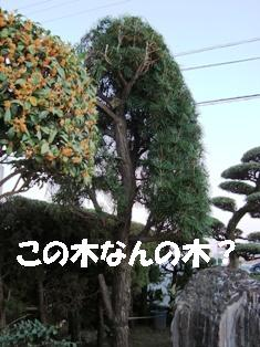 DSC00582-1.JPG
