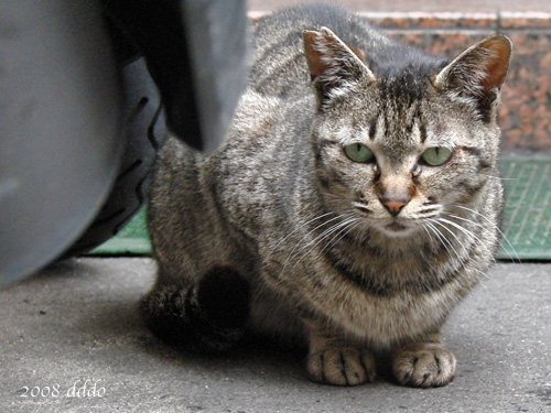 Cat/ネコ(Photo/写真)