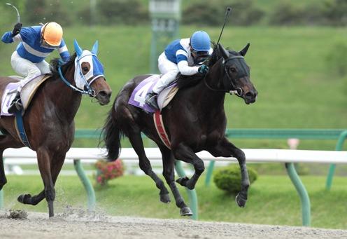 日高賞 レース
