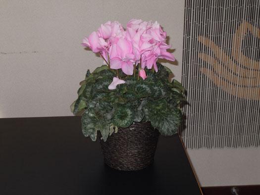 20101229梶川塾の花
