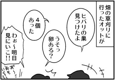 ヒバリの巣.jpg