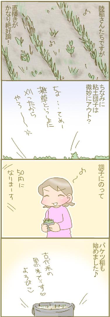 陸稲発芽3.jpg