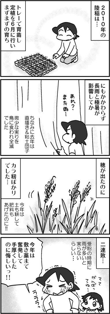 2010陸稲1.jpg