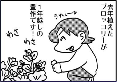 ブロッコリー豊作.jpg