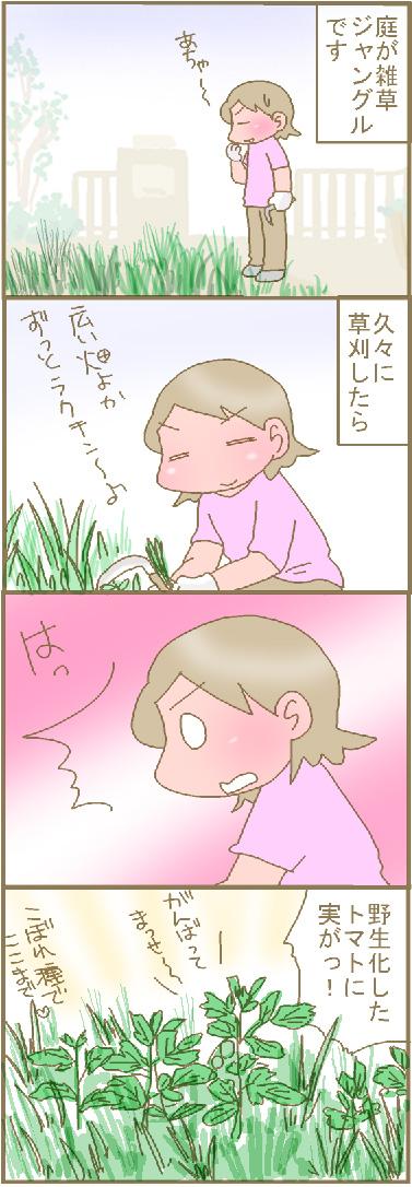 庭の雑草.jpg