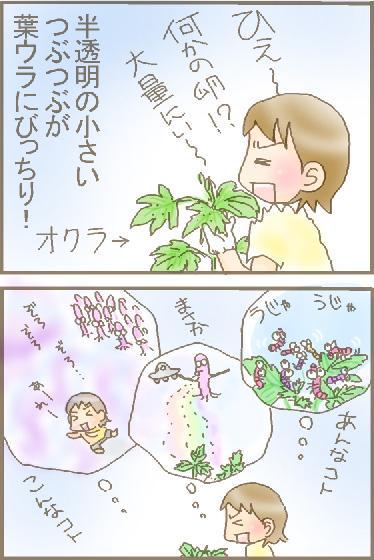 オクラの粒1.jpg