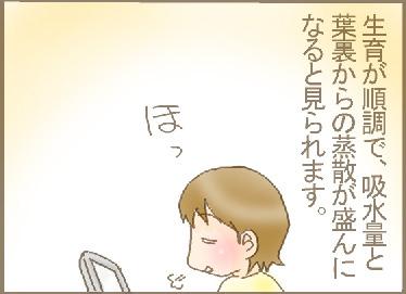 オクラの粒2.jpg