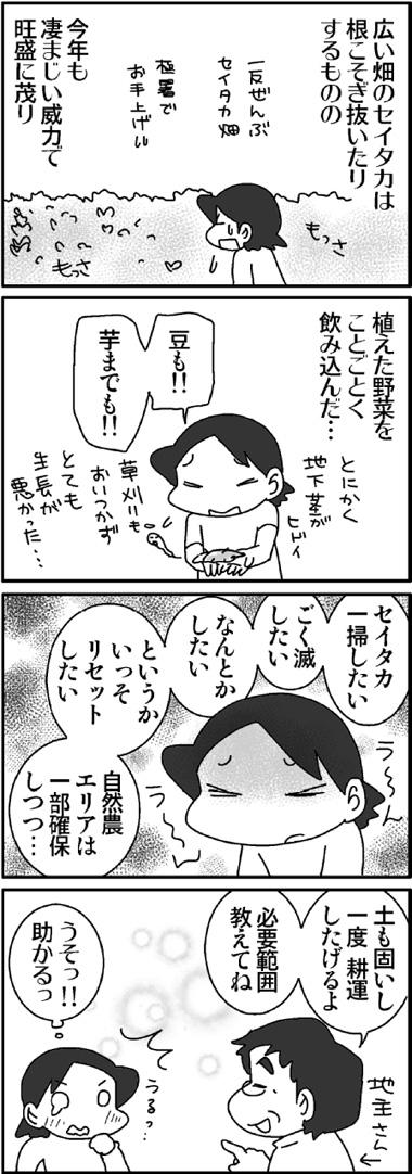畑のセイタカ1.jpg